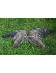 Ganzen vleugels