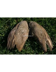 Patrijzen vleugels