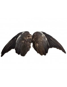 Pigeons Wings (2 pieces)