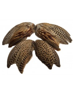 Pheasants Wings (2 pieces)
